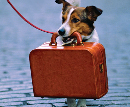 What to Put in Your Pet's First Aid Kit